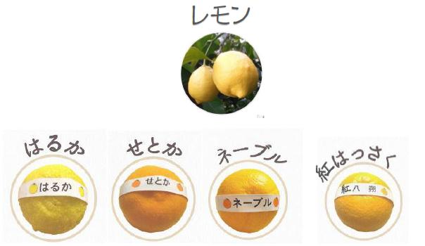 柑橘五種類