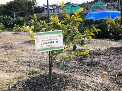 レモンの苗木のオーナー権2020