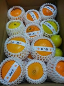 お待たせしました!期間・数量限定!この時期だけの柑橘色々セットです
