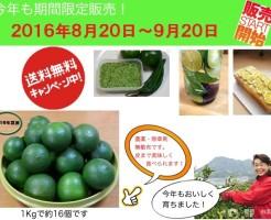 青みかん申し込みチラシ2016.jpgs