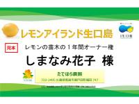 レモン苗木のオーナー券2020