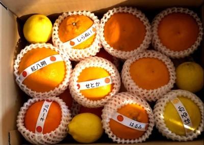 柑橘詰め合わせいろいろセット20200310